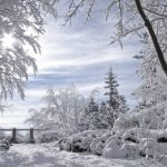 У лютому дерева в інеї – медовий взяток буде щедрим