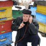 Вимушений зимовий огляд бджолосімей