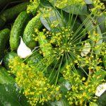 Малосольні огірки
