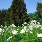 Криворудський дендропарк:  неопалимі письмена природи