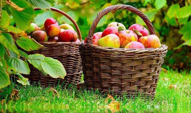 У серпні до обіду літо, а після обіду – осінь