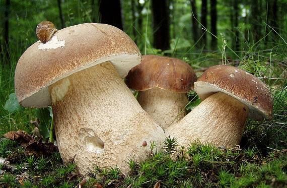 Сезон грибів:  профілактика отруєнь  і перша допомога
