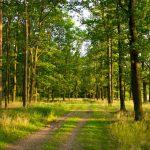 """Юрій ТАРАНЕНКО: """"Якщо лісове  господарство потрібне державі,  то вона повинна про нього  піклуватися"""""""