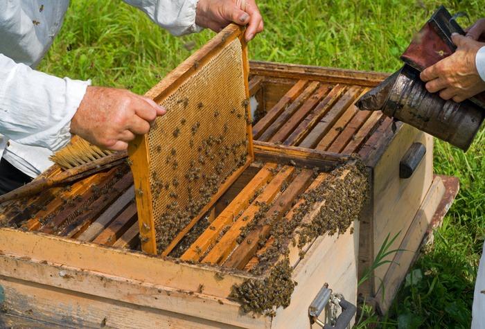 На часі – осіння ревізія бджолосімей