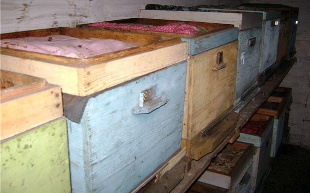 Час подбати про безпечну зимівлю бджіл
