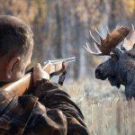 Полювання на лосів: заборонити не можна дозволити…