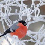 У лютому багато інію на деревах – буде щедрий медозбір