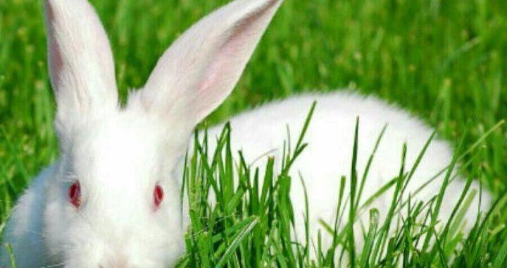На що звертати увагу при купівлі кролів