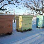 Як там бджілка зимує?..