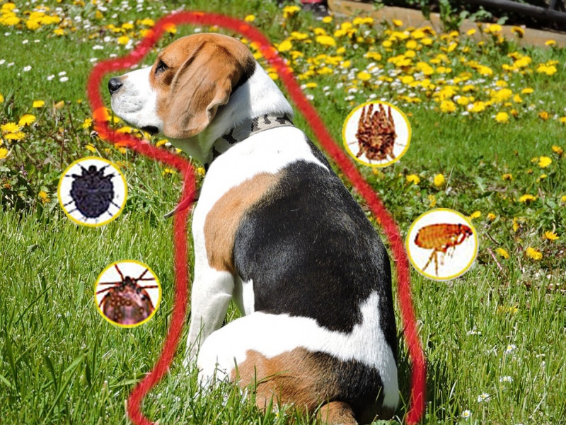 Захистіть домашніх улюбленців від весняної навали кліщів