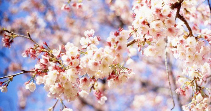 У квітні ластівка день починає…