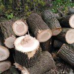 Рубають дерева, а кажуть – хмиз…