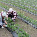 Альтернатива поліетилену: правильно вибираємо агроволокно