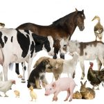 """""""Вороги"""" та """"друзі"""": особливості тваринного дворового етикету"""