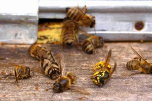 Нехай бринить бджола на кожній квітці