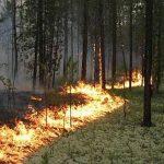 Причина лісових пожеж – навмисні підпали  та необережність