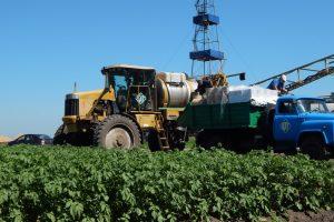Перспективне овочівництво:  проблеми, виклики, можливості