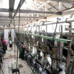 Молоко у корови на язиці, або Як у сільгосппідприємстві «ПРОМІНЬ-ПРИВАТ» доповнили і збагатили народну мудрість