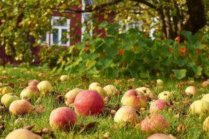 З початком осені покликав сад