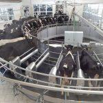 На Полтавщині з'явився ще один  надсучасний доїльний зал