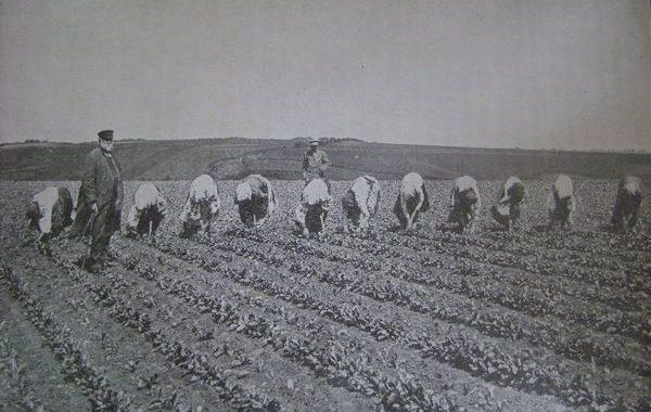 Ринок землі та його вплив  на іпотечне кредитування  в Україні (1861– 1917 роки)