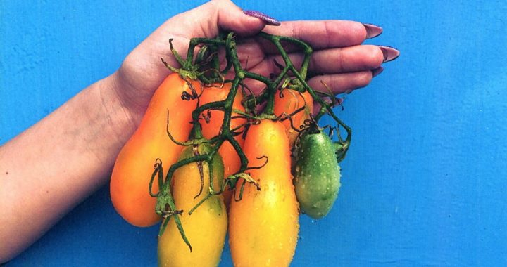 Поділюся врожайними томатами