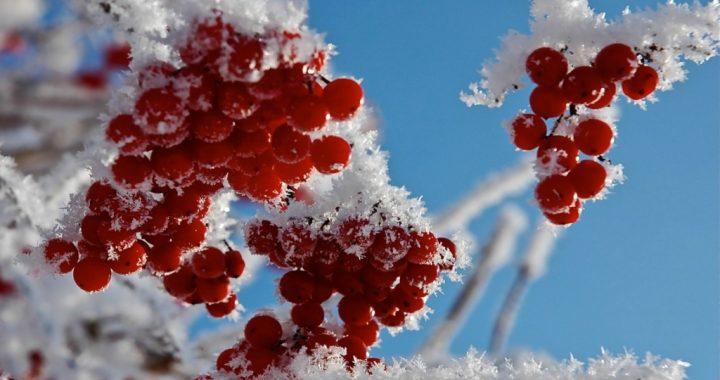 І землю тихо сніг накриє, щоб зігрівати до весни