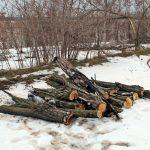 Лісосмуги плачуть під сокирами, або Нелегальний бізнес, економічна безвихідь чи новий підхід у господарюванні?