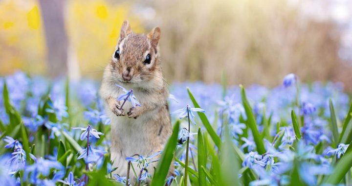 У природі вже пахне весною