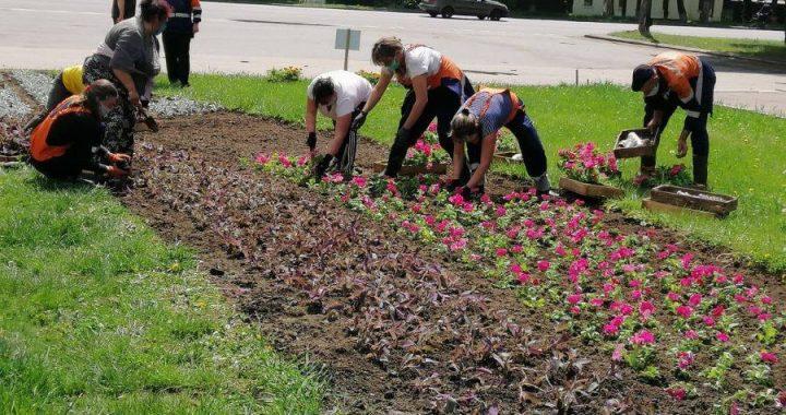 У Полтаві висадять рекордні 120 тисяч квітів