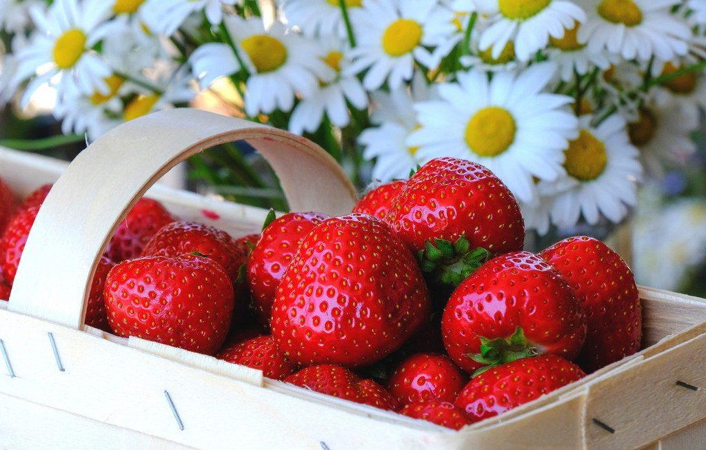 «Черемушки»: люди привітні, ягоди – смачні