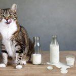 Якщо молоко не смакує