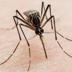 Щоб комарі не кусали