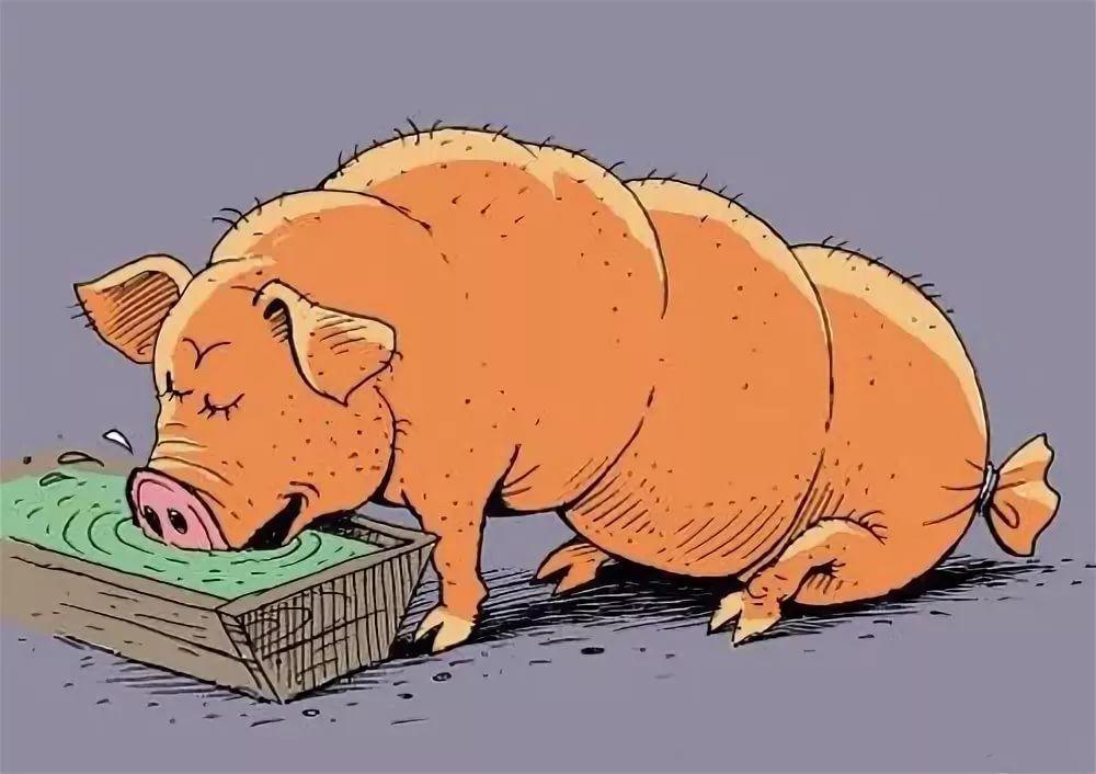 """""""Свинське"""" питання, або Історія про те,  як тварини розсварили людей"""