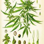 Оздоровить травний тракт