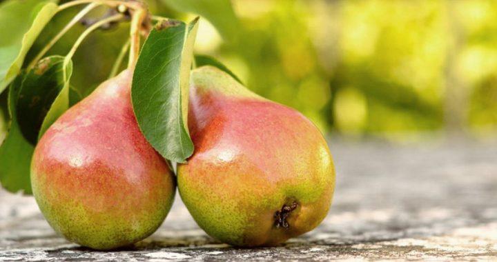 Зимові груші – мрія кожного господаря