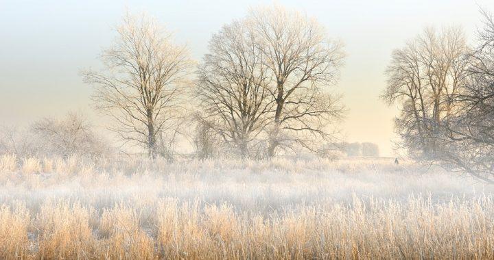Грудень на всю зиму землю вистуджує