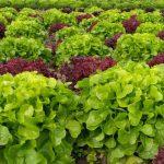 Салат у зиму – варіант безпрограшний