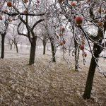 Профілактика зимових пошкоджень дерев