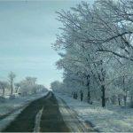Полтавським лісосмугам обіцяють «друге життя»