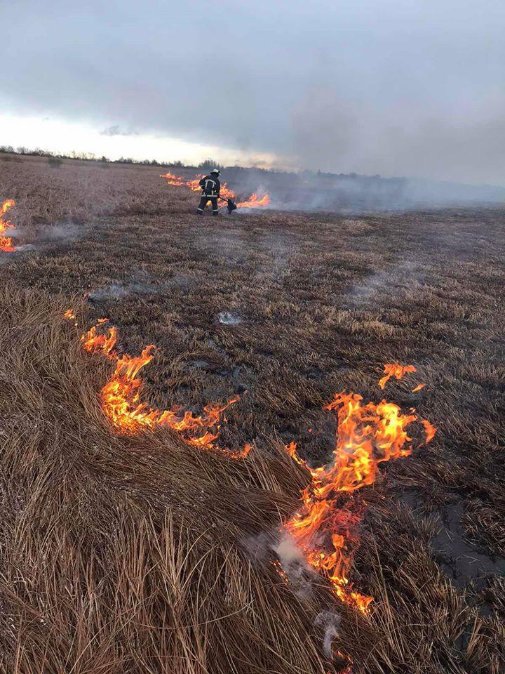 Трагічні наслідки спалювання  сухої рослинності