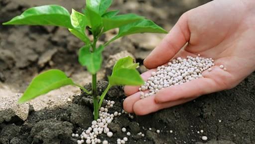 Підживлення рослин