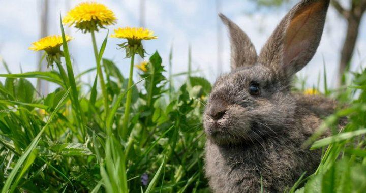 Раціон для кролів