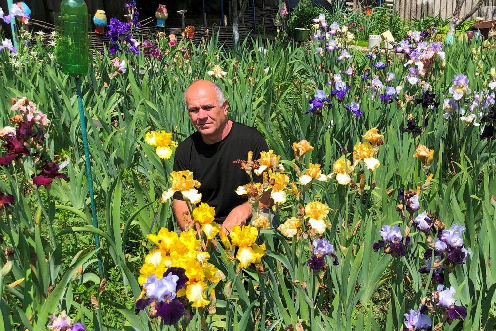 Іриси – королівські квіти