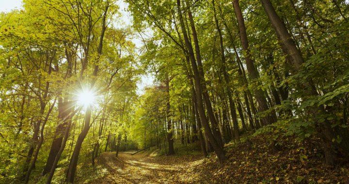 Зашумлять ліси