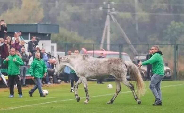 Кінь на полі  не валявся:  по-справжньому незабутній матч Україна – Італія