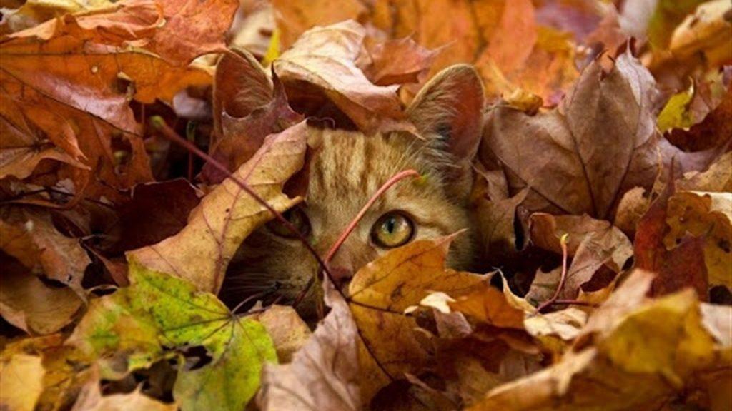 Вересень – житосій: посієш на поспіх – вродить на посміх